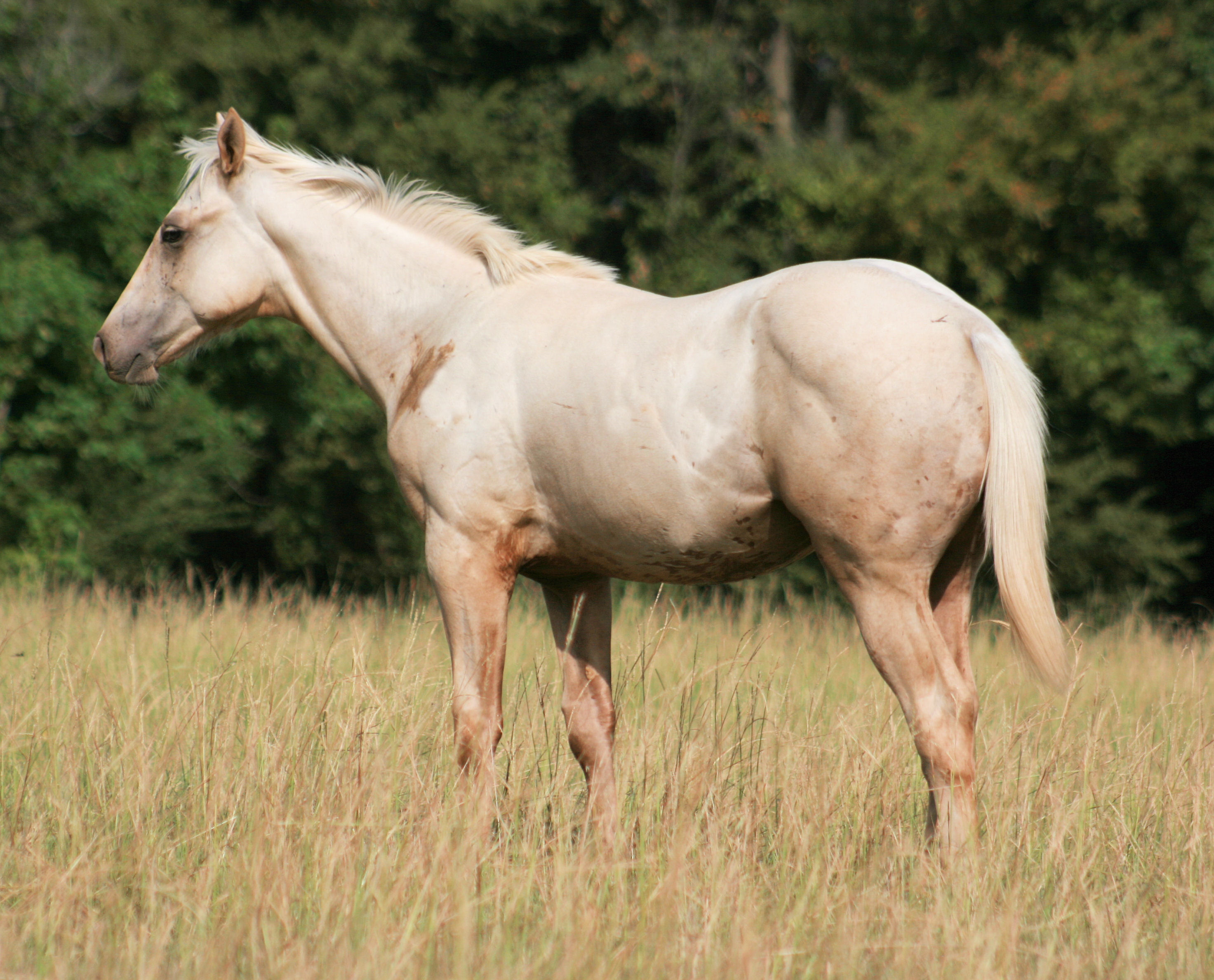 Paint Quarter Horses For Sale In Va