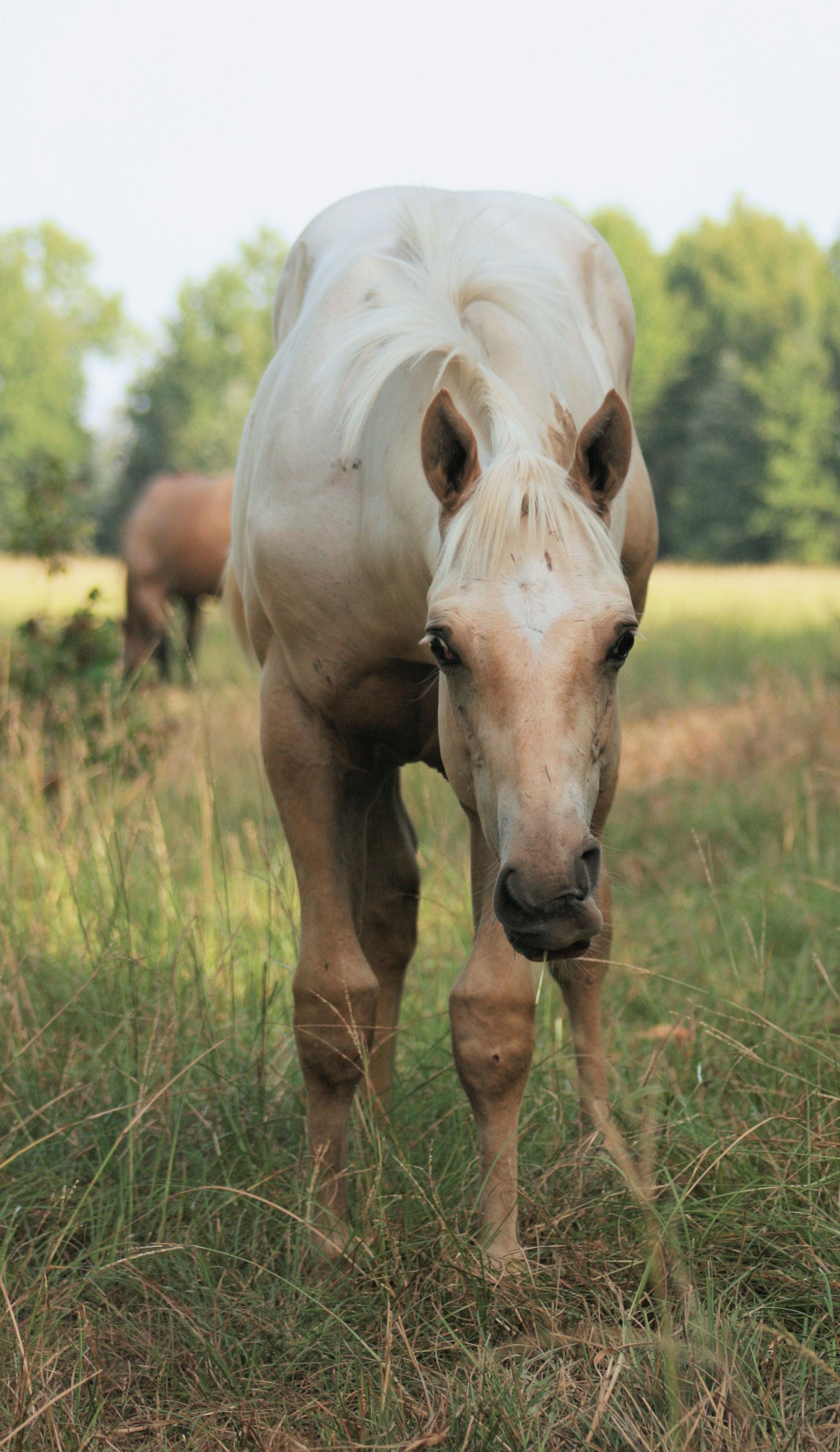 Quarter Horse Racing For Sale Texas Texas Quarter Horse